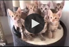 Funny Cats Better Than Funny Pranks Funny Cat