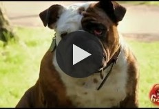 Best Of Just For Laughs Gags - Best Dog Prank